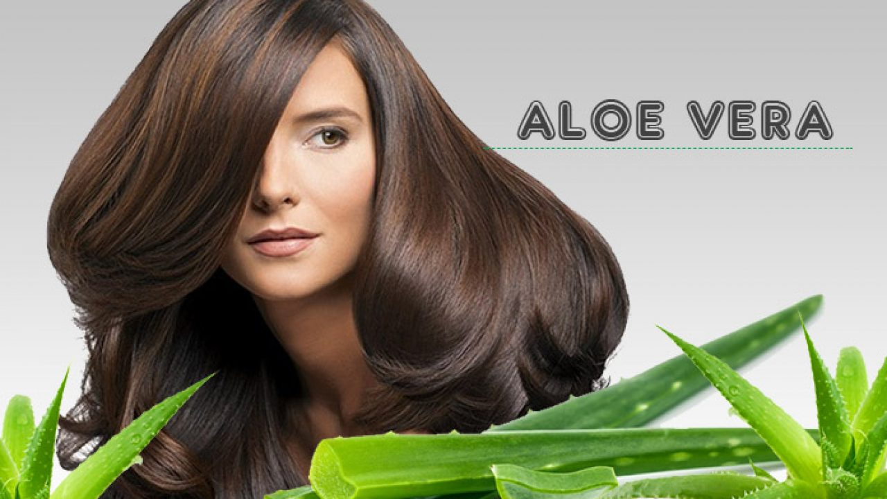 Benefits of Aloe Vera to Cope with Hair Loss